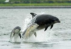 Chanonry Point Scotland, best place to view bottle nose dolphins.