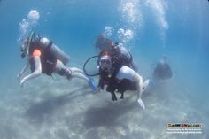 The students dive together 2-by-2 into the deeper waters to see the coral reefs and their tropical fish inhabitants :)