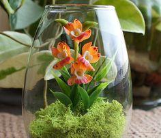 Mini Dendrobium Orchid Terrarium - www.missmossgifts.com/shop/mini-dendrobium-orchid-terrarium/