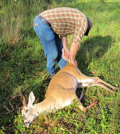 Should hunters be able to sell deer hides and other parts from deer they kill?