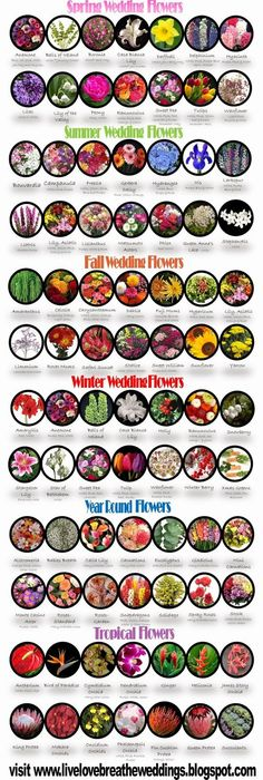 #Wedding #Flowers by Season.                                                                                                                                                                                 More