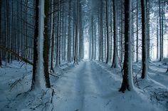 Parce que je suis de l'hiver et de l'automne. Résolument!