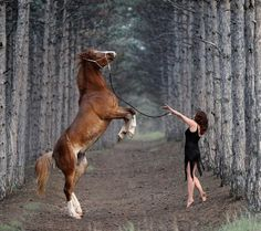Beautiful Horse With Trainer ...