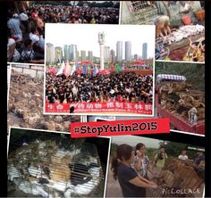 #StopYuLinTorture 4years Chinese activists have led the way 2 protect cats/dogs frm horrible torture.