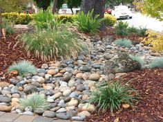 low water gardens traditional landscape