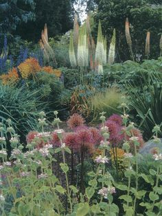 A dramatic vignette in Linda Cochran's garden: from the front, pale pink Phlomis purpurea, globular flowers of Allium 'Globemaster', russet tones of a fading Euphorbia characias subsp. wulfenii 'Lambrook Gold', and tall spikes of foxtail lily (Eremurus). Photographs by Terry Moyemont