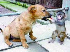 animal friendship032