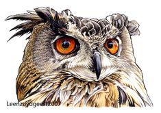 Eurasian eagle owl by LeenZuydgeest.deviantart.com on @deviantART