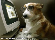Cute corgi dog with glasses funny animals | Mónica E. Hernández ...