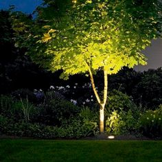 To Choose Outdoor Lighting: Exterior & Landscape Lighting 101 In-ground lights are used to illuminate specific landscape.In-ground lights are used to illuminate specific landscape.