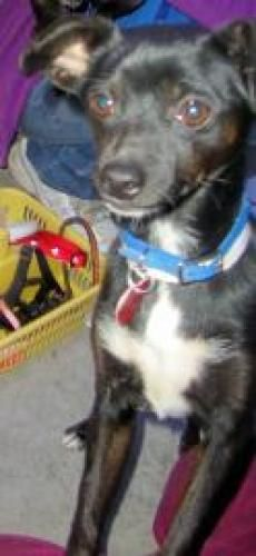 #Adopt Prissy! she's at SoHumane in #Medford, #OREGON ph 541-779-3215 ext 100 • adoptions@sohumane.org