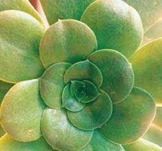 Terra e Fertilizante:  A mistura de terra indicada para o cultivo de cactos pode ser obtida misturando partes iguais de areia e de uma boa terra para plantas caseiras. Para fertilizar, recomenda-se, uma vez por mês, substituir a água da rega por um fertilizante líquido básico para plantas com o Biofert Jardim