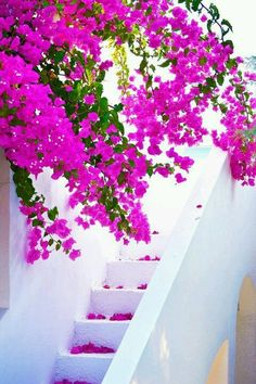 White and Fuchsia, Crete , Greece