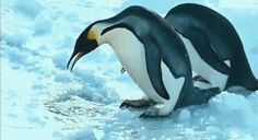 """Crap—sorry—after you!"" 
