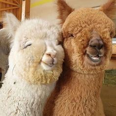Baby Animals Pictures, Cute Animal Photos, Funny Animal Pictures, Cute Little Animals, Cute Funny Animals, Happy Animals, Animals And Pets, Smiling Animals, O Castor