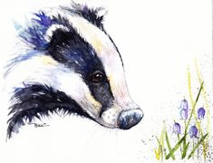Original Watercolour Painting by Be Coventry,Animals,Realism, Badger & Bluebells
