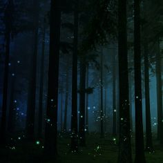 My favorite part of summer: fireflies at night. :)