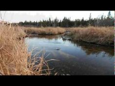 Maine Real Estate | New Home, Barn, 45 Acres Of Fields, Woods, Stream MO...