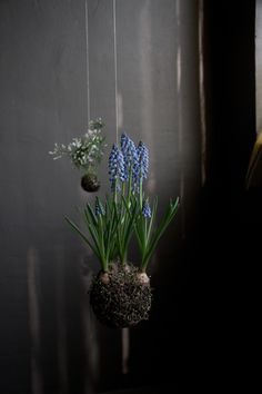 STRING GARDENS  Photographed by Annelie Bruijn