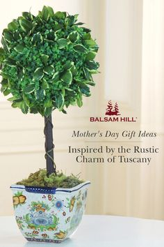 Balsam Hill's Boxwood Topiary in Tuscan Planter is a beautiful complement to tabletops, mantels, or entryways. Surprise Mom on her special day with the timeless charm of this Italian-inspired floral arrangement. #MothersDay