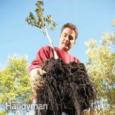 Plant a tree in early spring before the buds open or in the fall before the tree goes dormant. In this article we'll show you how to plant a healthy tree that will live and thrive for decades.
