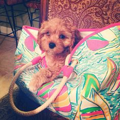 Cute puppy in Lilly bag