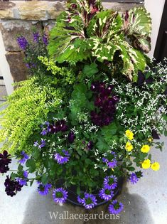 Late summer container garden for shade to part sun.