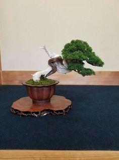 Indoor Bonsai Tree, Bonsai Art, Bonsai Trees, Flowering Succulents, Juniper Bonsai, Pond Design, Shrubs, Planter Pots, Artsy