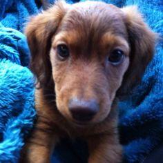 Baby Duke