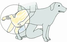 Canine Massage & Stretching