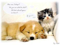 So sad Kitty !!