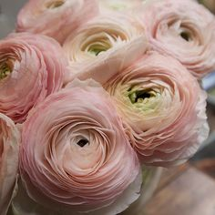Ranunculus/is a category of flowering plants in the family Ranunculaceae. The petals are typically very lustrous, particularly in yellow types, owing to a unique coloration mechanism: the flower's top surface is smooth triggering a mirror-like reflection. Blush Wedding Flowers, Wedding Bouquets, September Wedding Flowers, Wedding Flower Arrangements, Pink Flowers, Beautiful Flowers, Exotic Flowers, Yellow Roses, Pink Roses