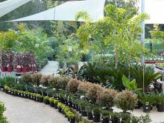 Small Business Ideas | List Of Small Business Ideas: How to Start a Plant Nursery Business