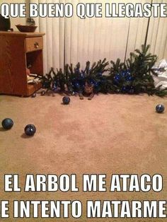 chistoso                                                       … Funny Cats, Funny Animals, Funny Jokes, Cute Animals, Fun Funny, Funny Stuff, Three Cool Cats, Mexican Memes, Spanish Humor