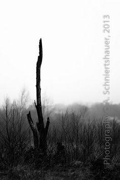 brouillard dense -I--
