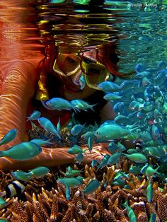Under Water, should take a picture holding snorkeling gear!!!