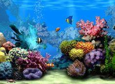 30 Protectores de pantalla en 3D de acuarios peces y del mar ...
