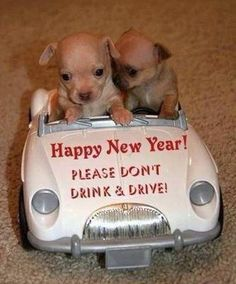 Funny Happy New Year Images 2019 - Cute Funny New Year Images & Pictures Happy New Year Funny, Happy New Year Quotes, Happy New Year Images, Happy New Year 2018, Quotes About New Year, Funny Happy, Happy Year, Chihuahua Puppies For Sale, Chihuahua Love