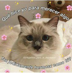 Cute Cat Memes, Cute Love Memes, Funny Memes, Soft Baby, Memes Amor, Memes Lindos, Romantic Memes, Tumblr Love, Love Phrases