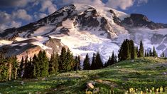 14,410 feet above sea level, Washington State's Mount Rainier has some of the highest peaks and largest glaciers in the United States.