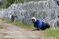 A kerítés alatt átmászó menekült Röszke térségében. Exkluzíz képriport az Origón!   Fotó: Dudás Szabolcs – Origo   http://bit.ly/1fHHZSE