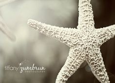 5x7 Starfish Photograph by tiffanyzumbrun on Etsy, $10.00