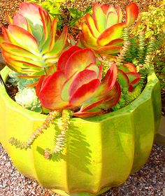 All sizes | Desert Plants in a Green Ceramic Bowl | Flickr - Photo Sharing!