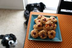 Dog Treat Recipe of the Month: Kira and Angie's Thanksgiving Feast Treats | Dogster