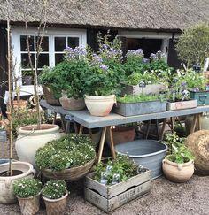 35 stunning small cottage garden ideas for backyard landscaping 18 Indoor Gardening Supplies, Container Gardening, Small Cottage Garden Ideas, Garden Nursery, Garden Styles, Garden Pots, Balcony Gardening, Outdoor Gardens, Outdoor Sheds