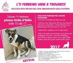 11/2 raccolta di viveri e farmaci per il #Rifugio #LaFavorita di #LNDC #Palermo