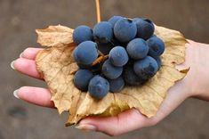 any colombino zice petruta dinu Blueberry, Fruit, Garden, Face, Nice Picture, Paradis, Insects, Plant, Berry
