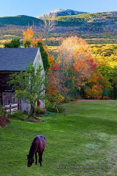 Autumns gloriously brilliant colors illuminates the countryside with a magical sense that all is right with the world. Add the barn and the grazing horse and one sees the perfection of America's farm land.