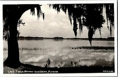 Inverness, Old Postcards, Florida, Beach, Water, Outdoor, Gripe Water, Outdoors, The Beach
