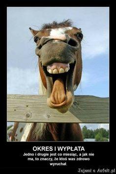 Dla ludzi o ponad przeciętnym poczuciu humoru ;-) <br />śmieszne  obrazki z opisami, śmieszne filmy  , humor dnia , ruchome  gify , demotywatory  na FB dla dorosłych , śmieszne koty na fejsa , smieszne kawały , śmieszne zdięcia memy  facebook ,śmieszne teksty